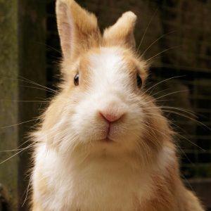rabbit-1455140_1920